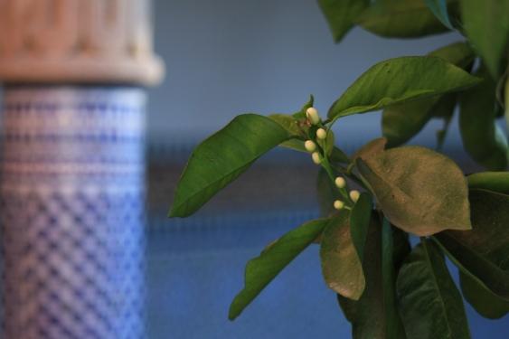 columna y hojas de jasmin
