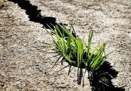 tu energía vital no se deja suprimir. mira como esta planta rompe el aslfalto. ven al Taller Toque Marioposa